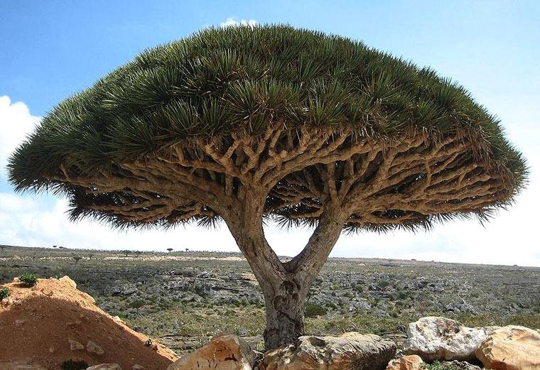 Sokotra (Jemen)
