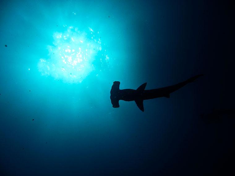 Świat podwodny wokół Wyspy Kokosowej, Kostaryka