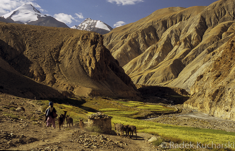 Szlak doliną rzeki Markhi, w górze szczyty Kang Yatze (ok. 6400 m n.p.m.)