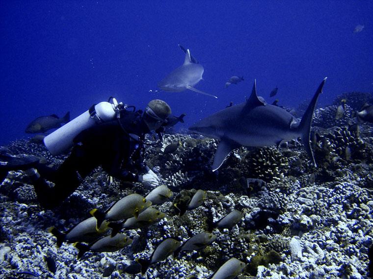 Pływanie z rekinami, Wyspa Rangiroa, Polinezja Francuska