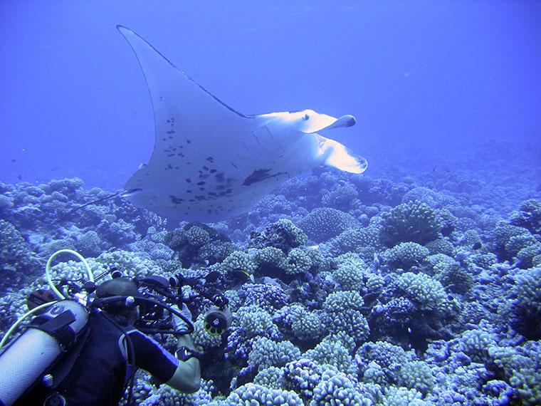 Nurkowanie na wyspie Rangiroa, Polinezja Francuska