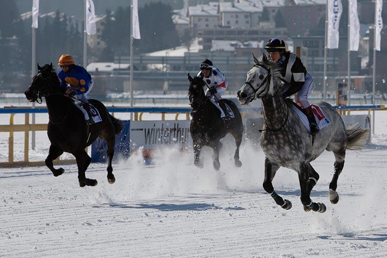 Konne wyścigi, Szwajcaria