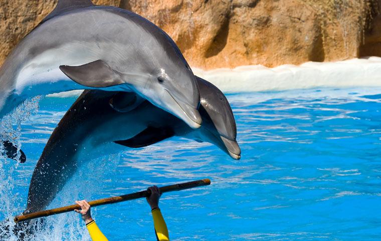 Delfiny w Loro Park, Teneryfa