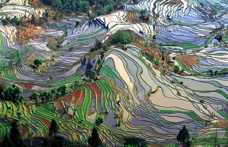 Tarasy ryżowe w Yunnan