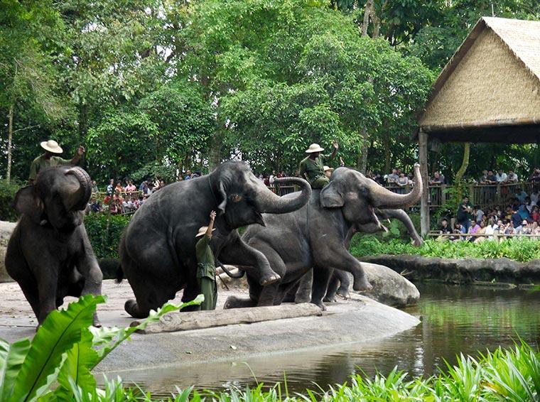 Słonie w Singapurskim ZOO
